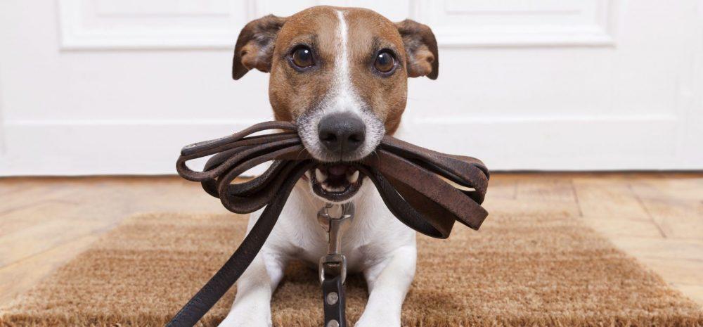 dogsitter trovare affidabile