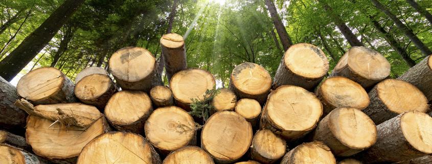 costruzioni legno come