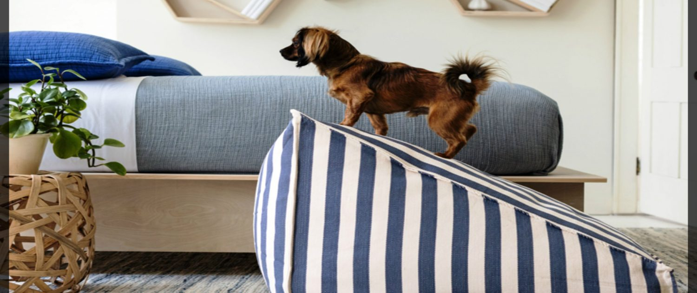 educare cane casa