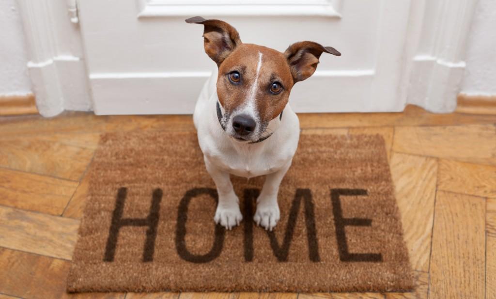 avere cane casa