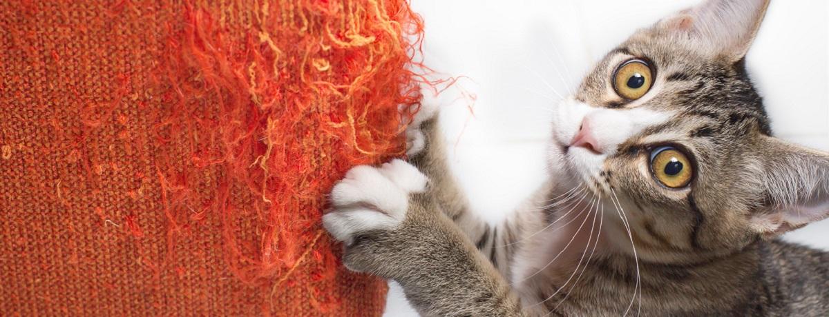 gatto-mobili-graffio