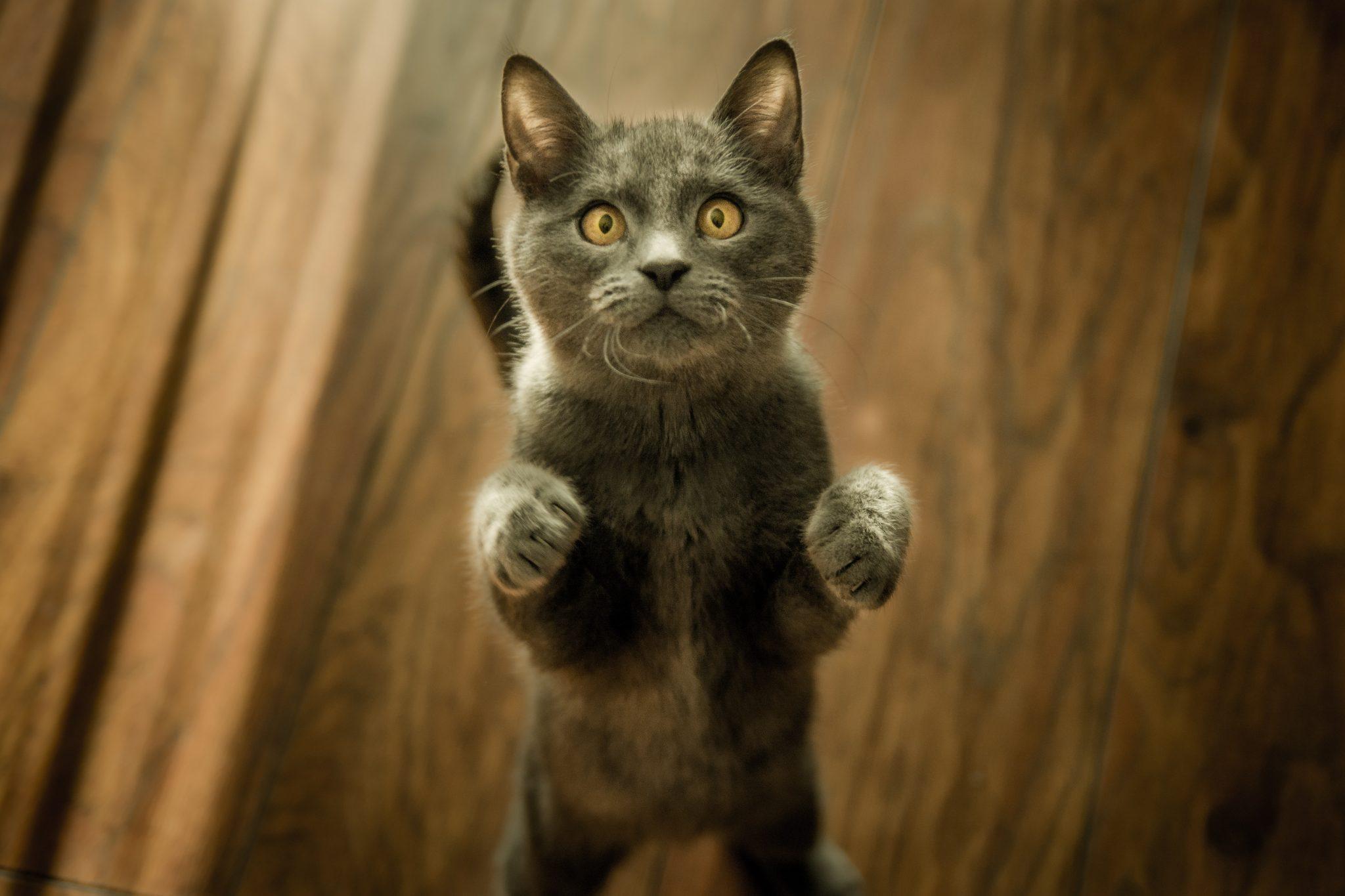 gatto-mobili