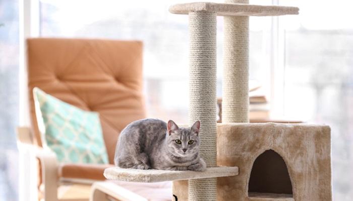 tiragraffi-gatto-mobili