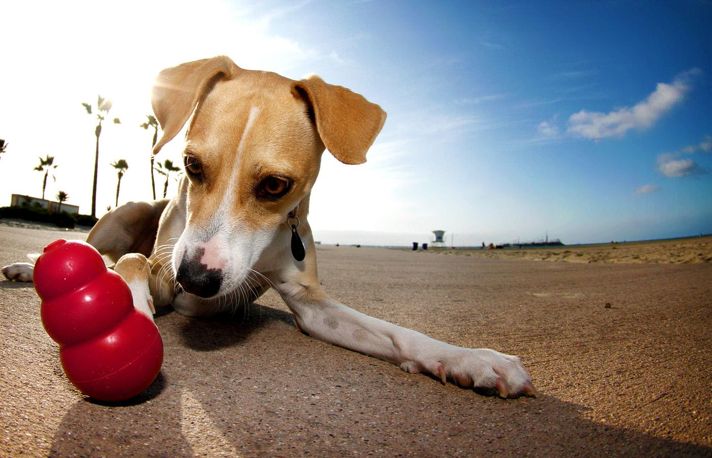 Cani: consigli per non farli annoiare in assenza del padrone