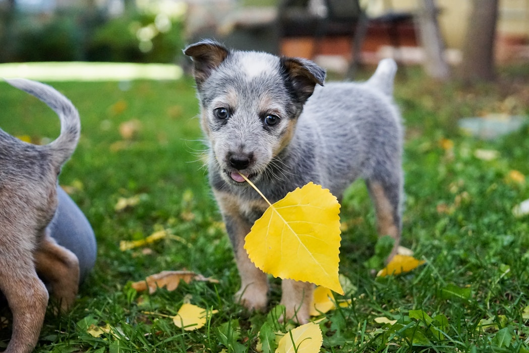 cani foglie