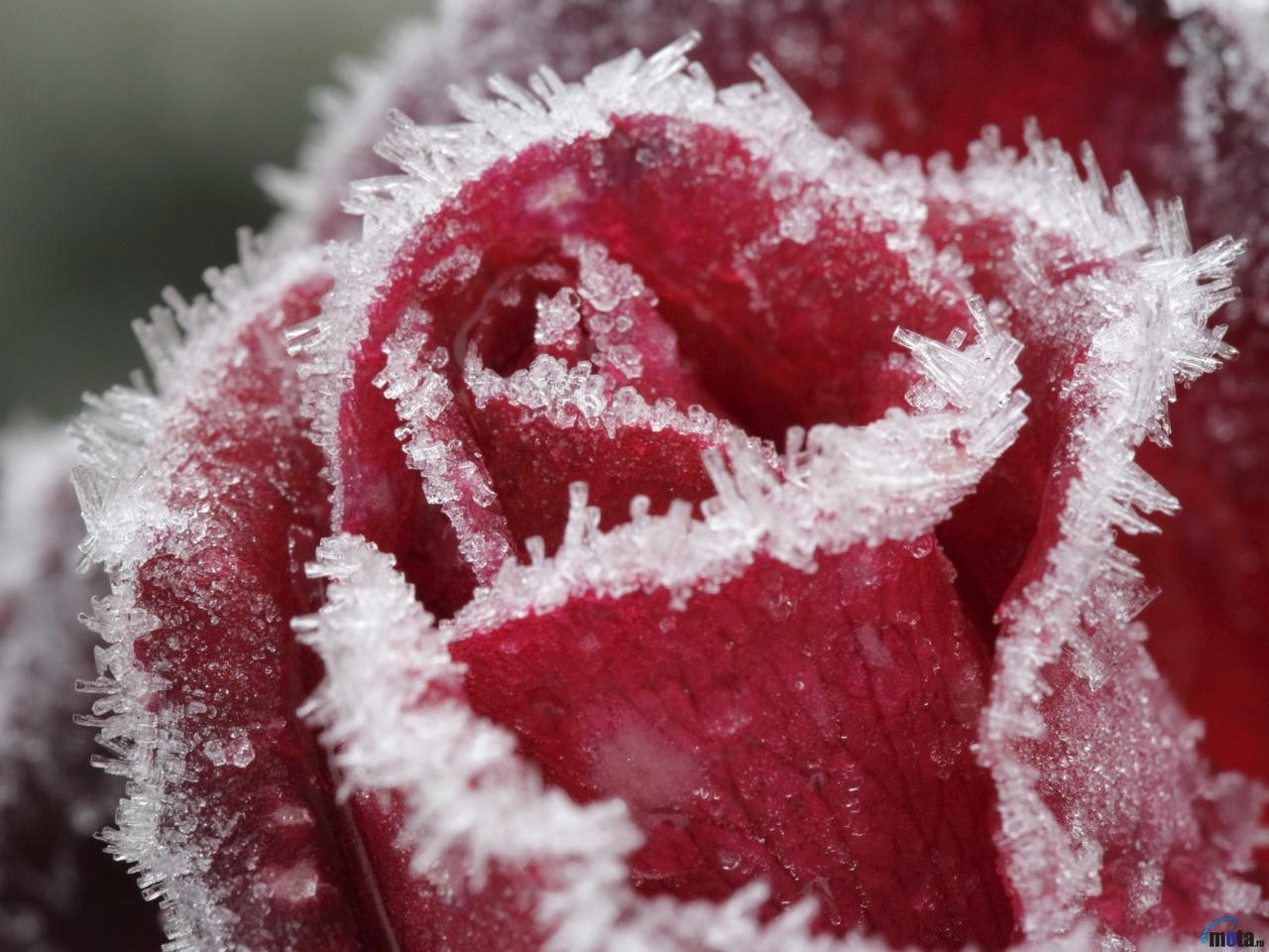 piante-ghiacciate-blog-ernesto