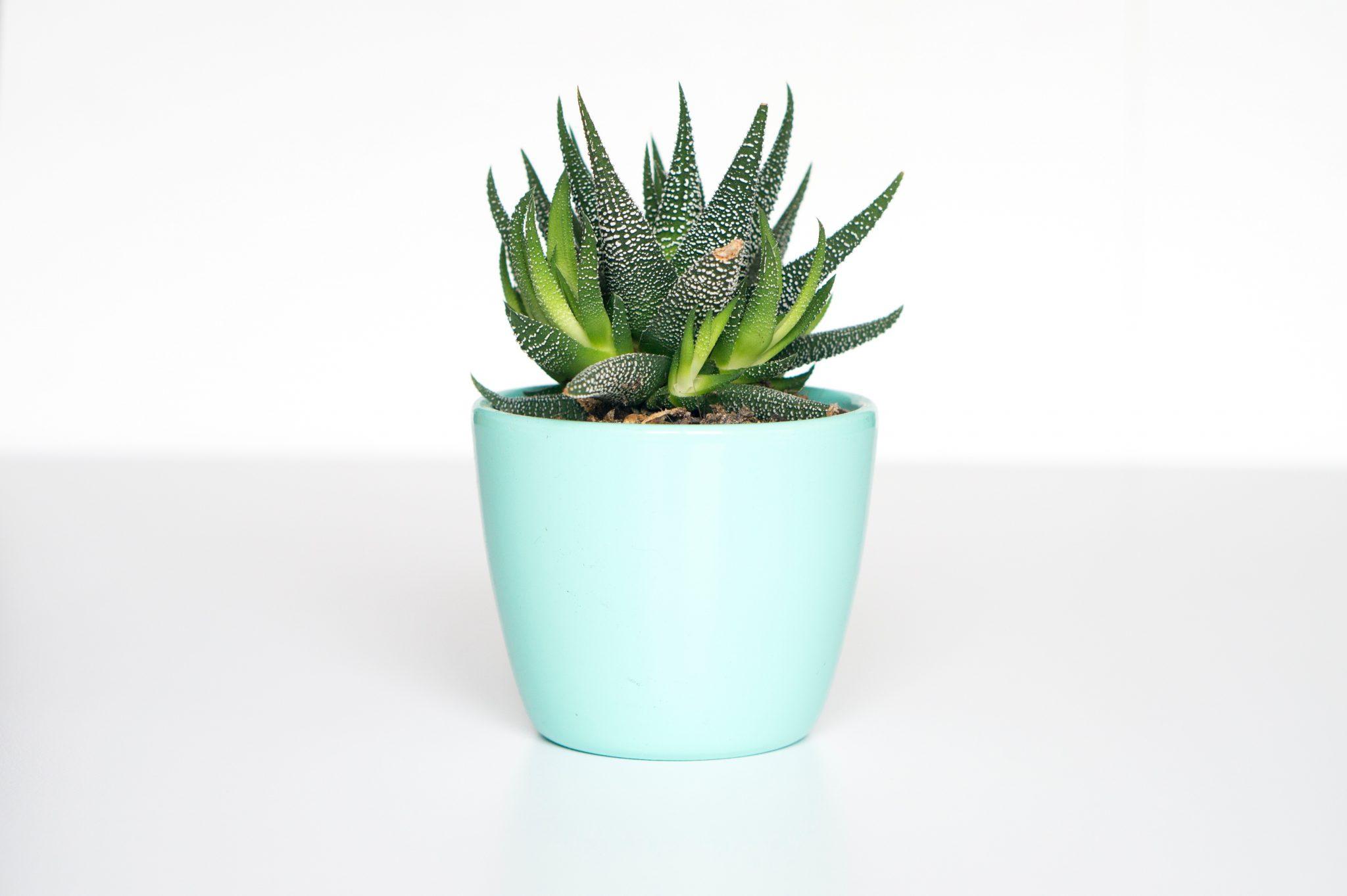 piante vaso