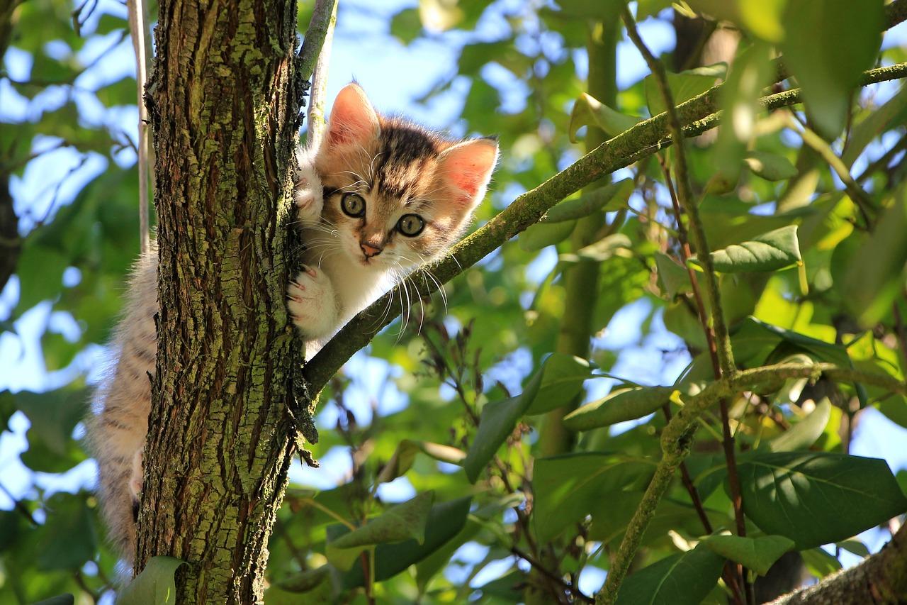 gatto- appartamento 1
