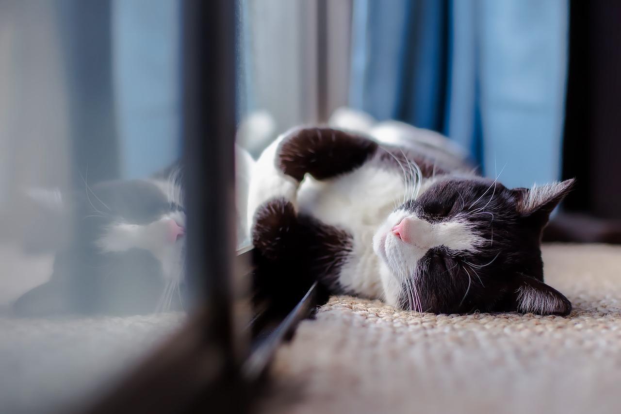 gatto-appartamento 2