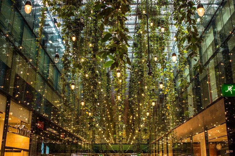 indoor gardening-fine