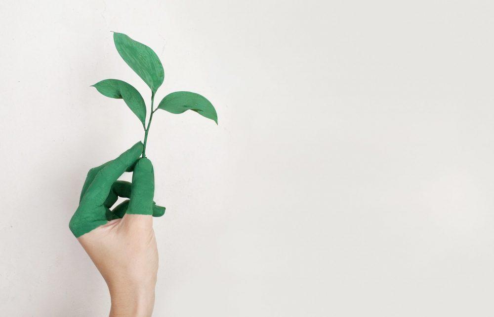 ecologia nel business