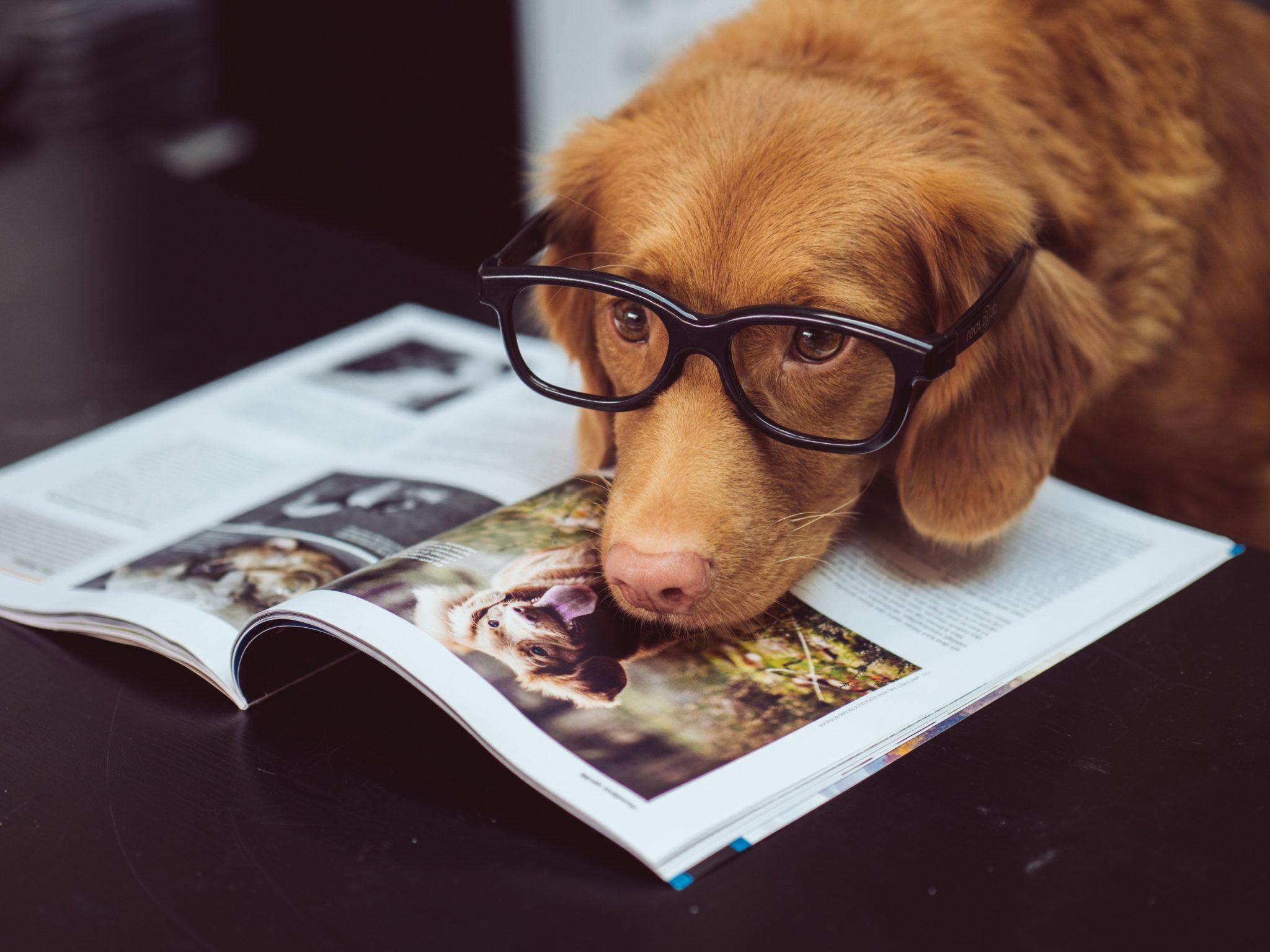 cane Ernesto appartamento