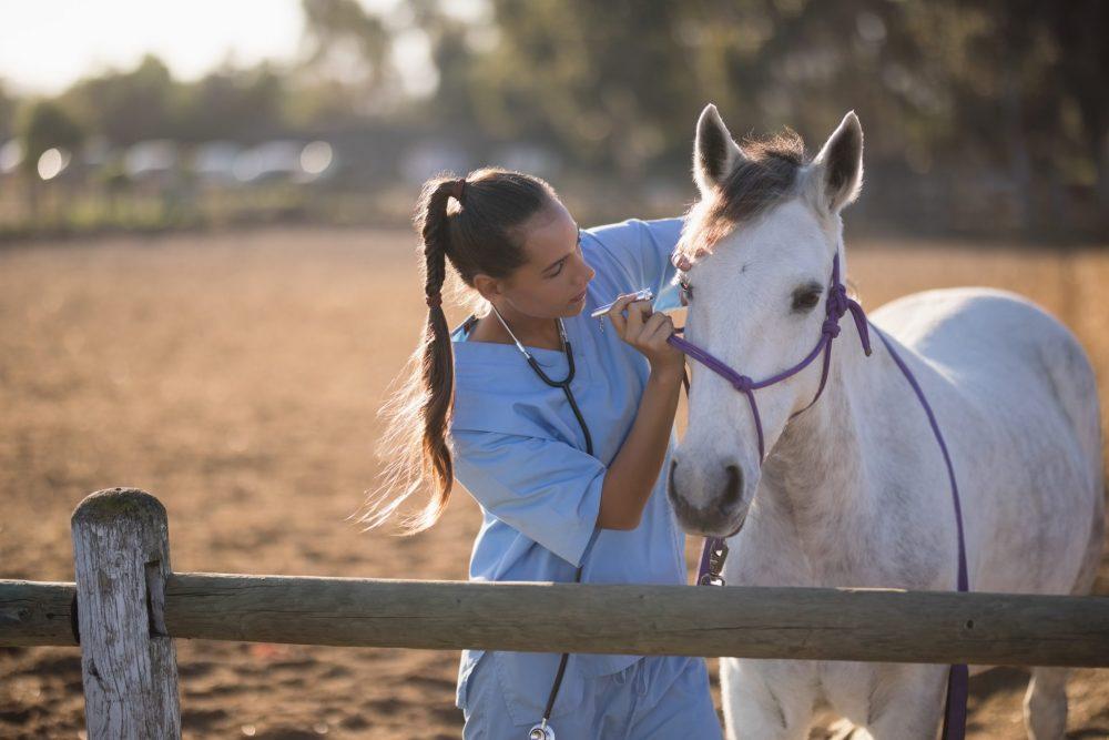 il veterinario come cura il tuo cavallo