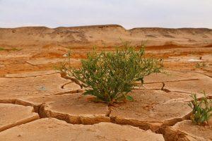 A cosa porterà il cambiamento climatico
