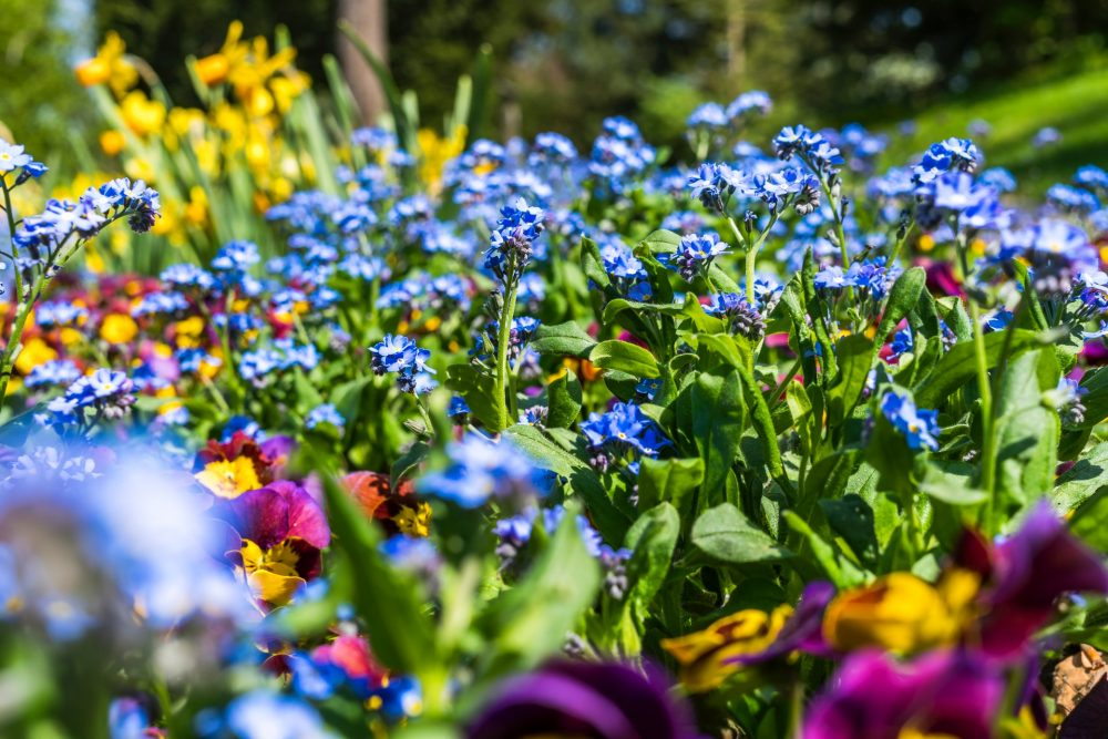 Trucchi per avere un giardino sano
