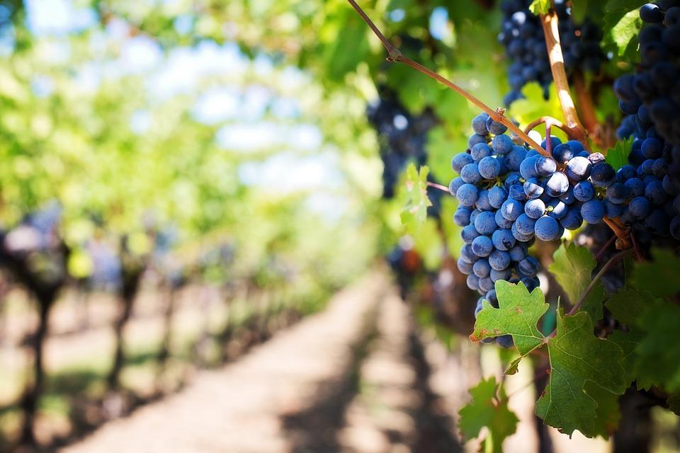 Paesaggi dove gustare un bicchiere di vino