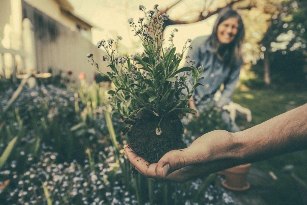 pianta morente tutto giardino