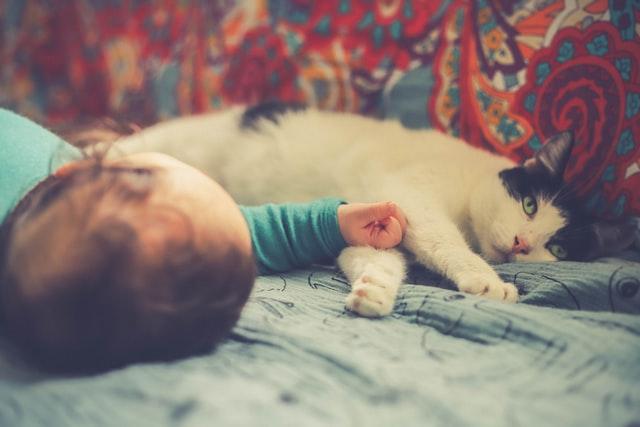 Gatti per bambini
