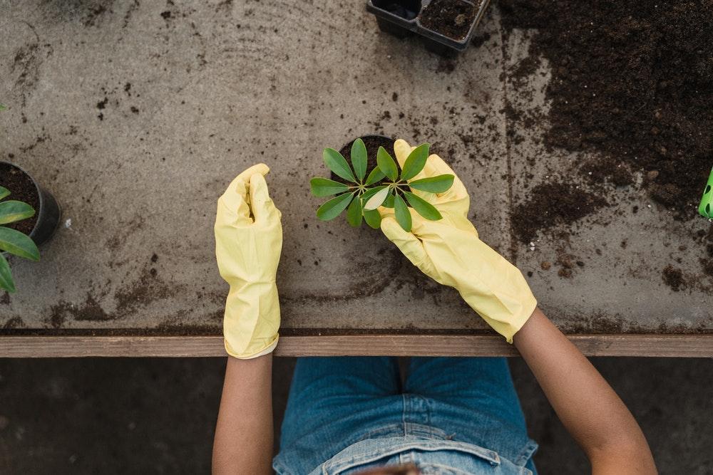 Servizi offerti dai giardinieri da assumere